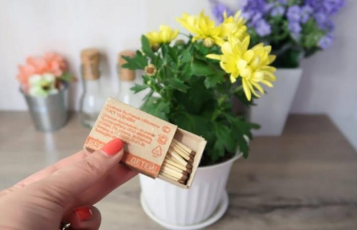 средство от мошек в комнатных цветах